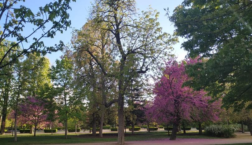 Retiro  Trees 2.jpg